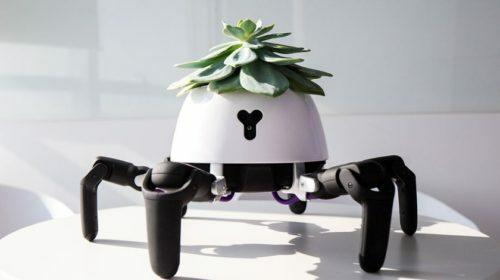 Robot behá za slnkom s rastlinou na chrbte